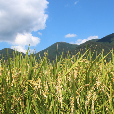 上野の里米 食べ比べ15kg(各5kg)