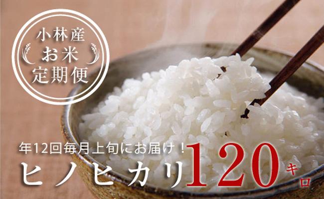 【定期便:全12回】小林産ひのひかり<10kg×12回>