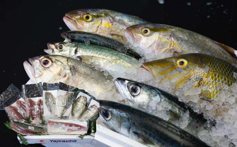■笠沙の鮮魚直送便
