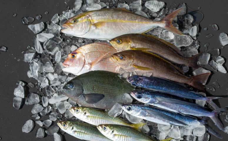 ■南さつま笠沙の鮮魚詰合せ(4kg)